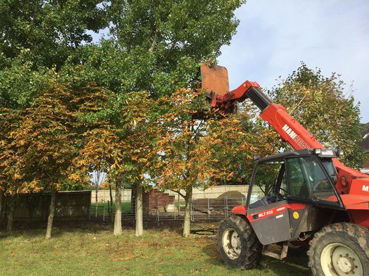 Tree care work