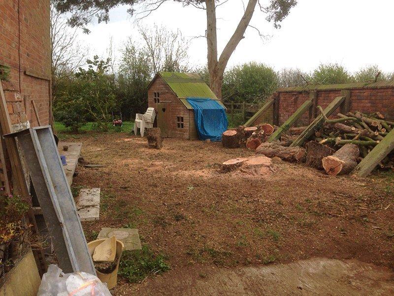Tree cutting area