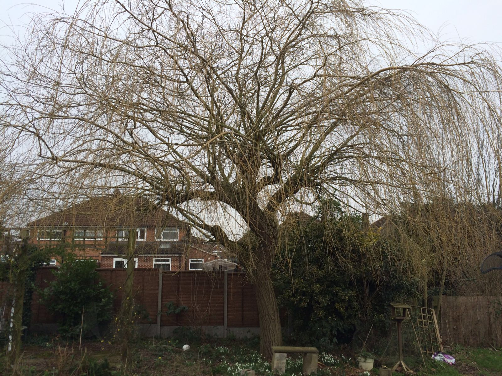 Tree crown trimming