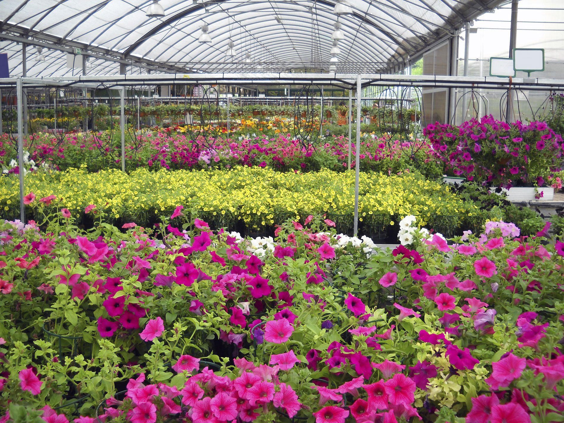 Bedding Plants Clemmons, NC