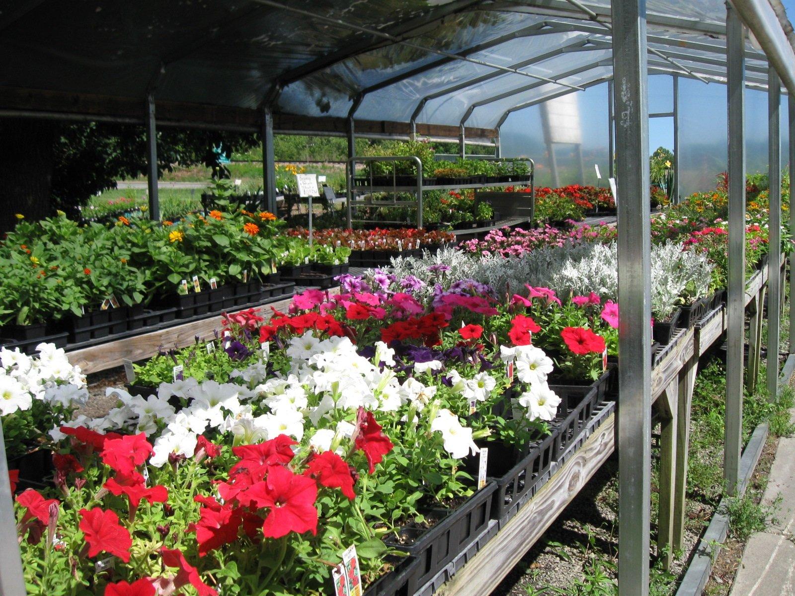 Local Greenhouse Winston-Salem, NC