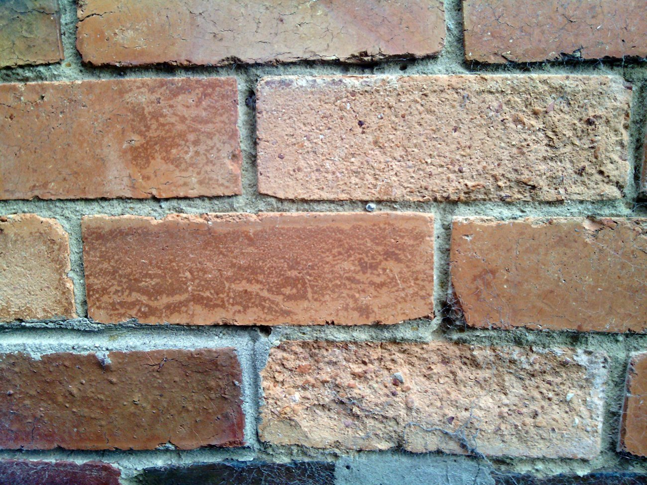 rising-damp-bricks