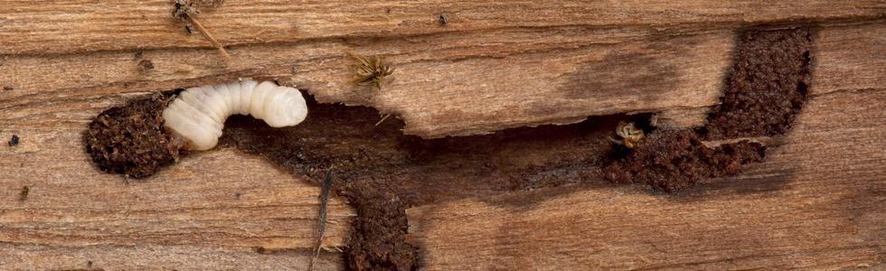 difesa del legno pisa