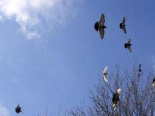 interventi anti piccioni