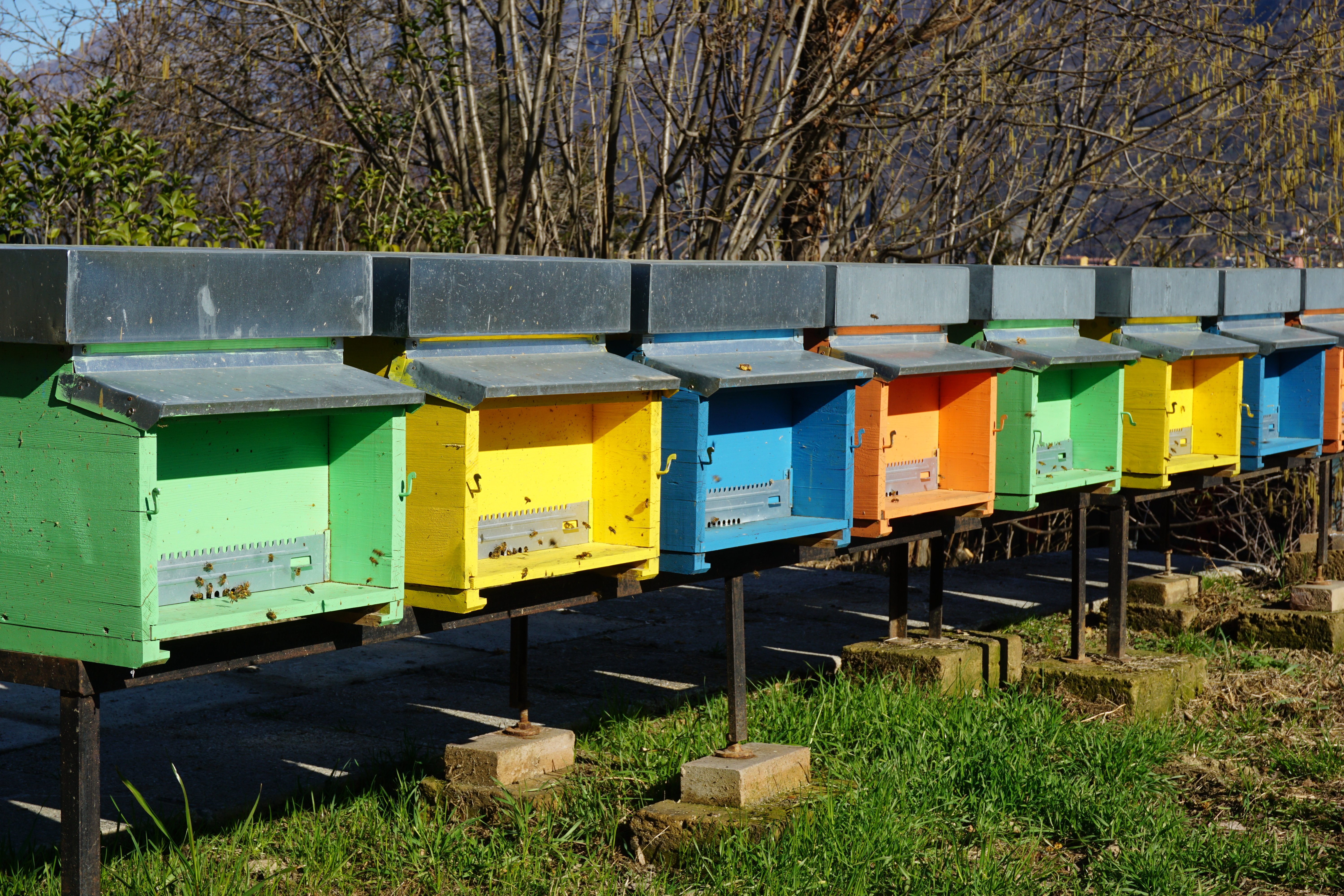 small honeybee houses