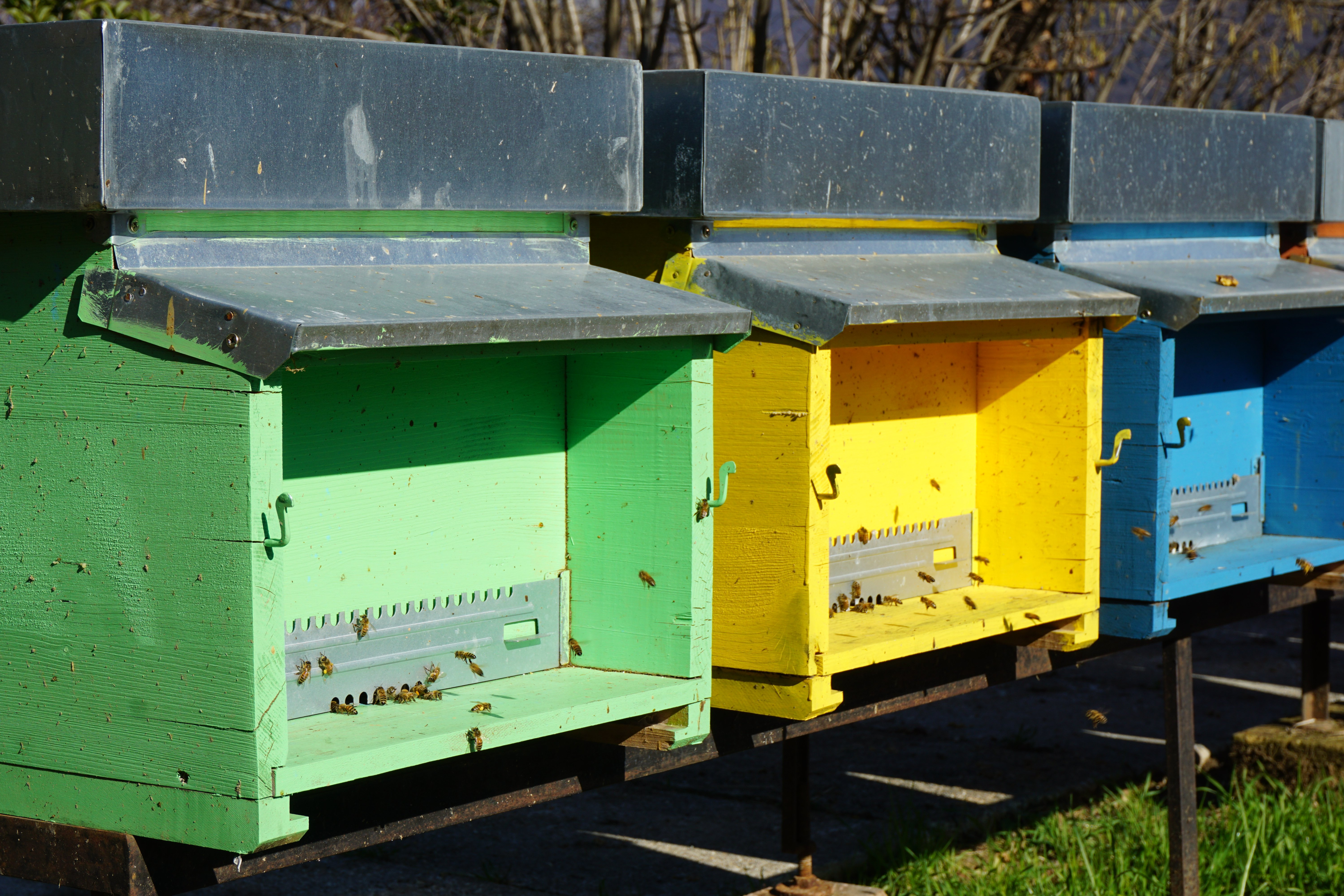 special houses for beekeeping