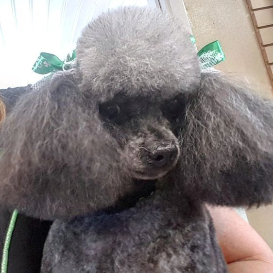 front look of fur puppie