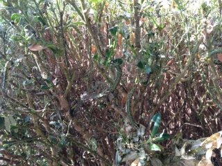 manutenzione giardini e spazi verdi