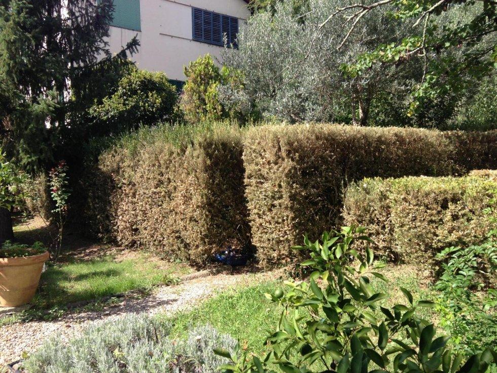 trattamento piante