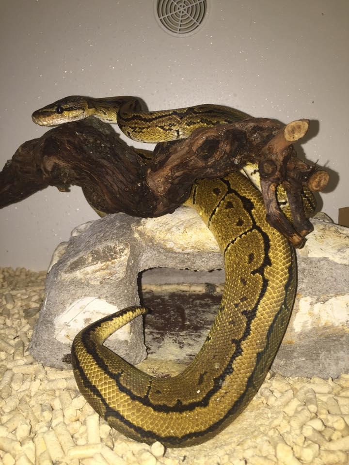 un serpente verde su un tronco di legno
