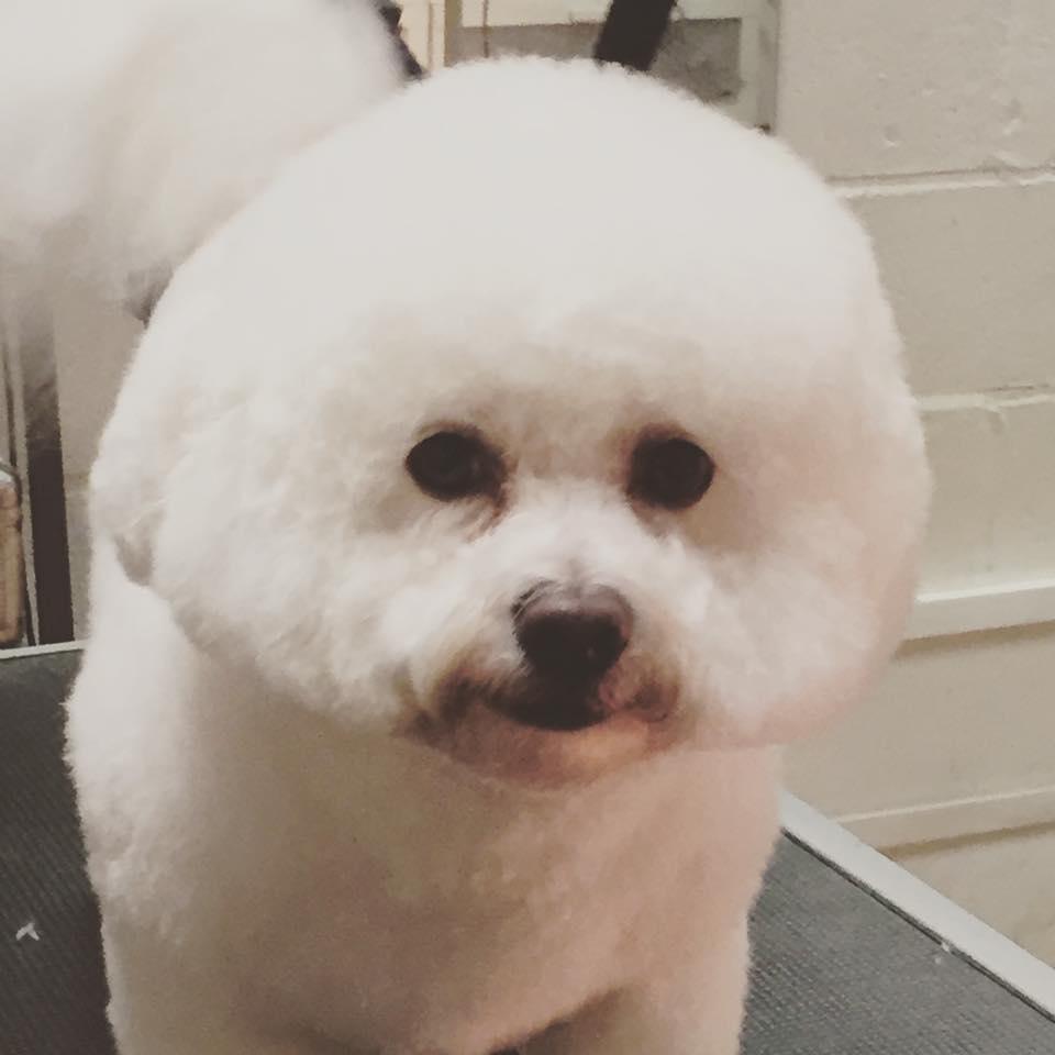stylish dog hair
