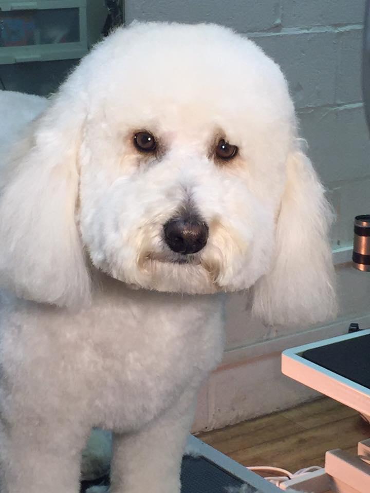 well-groomed dog