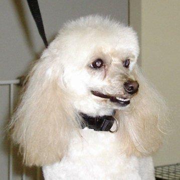 dog hair tied