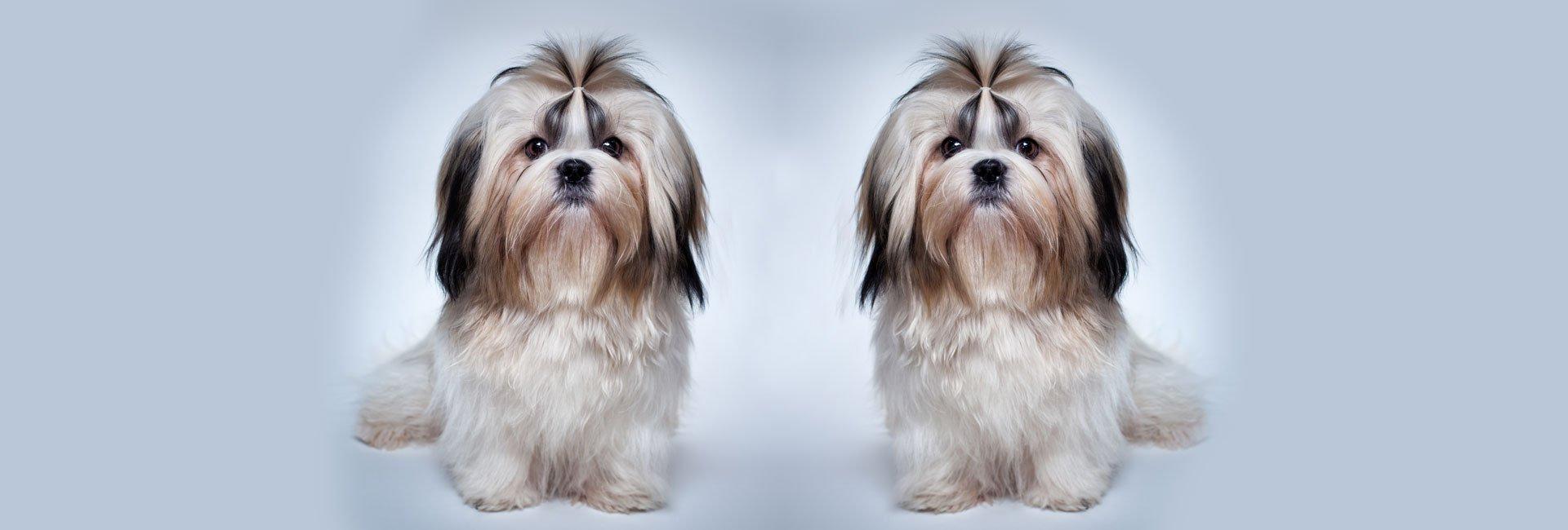 2 similar looking pets