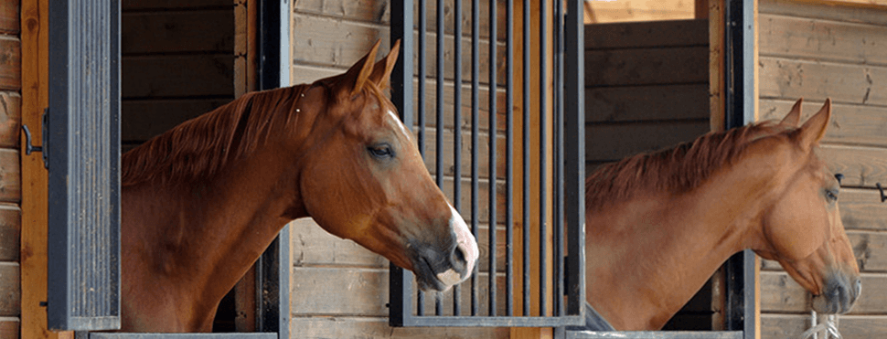 Bhs Approved Livery Stables In York Granary Livery Stables