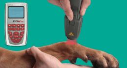 specialisti veterinari, cure veterinarie, visite veterinarie