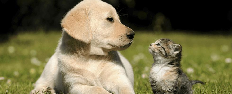 Cura degli animali, analisi per cani, analisi di laboratorio, Rieti