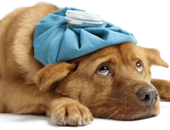 Cura e benessere degli animali