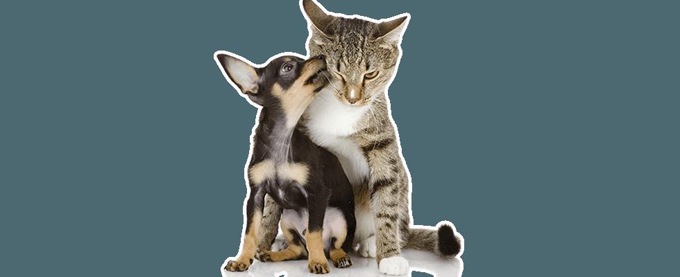veterinari, veterinario, assistenza veterinaria notturna, pronto intervento veterinari, Rieti