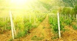 Vivaio per settore vinicolo