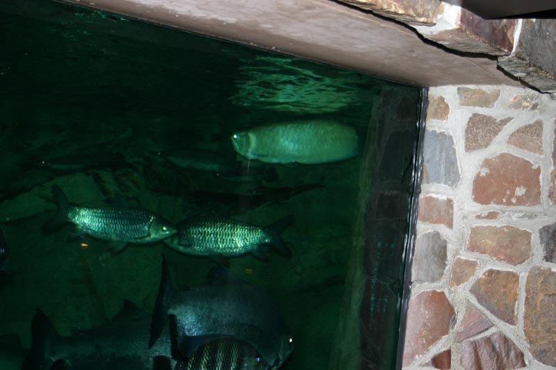 glass aquarium walls
