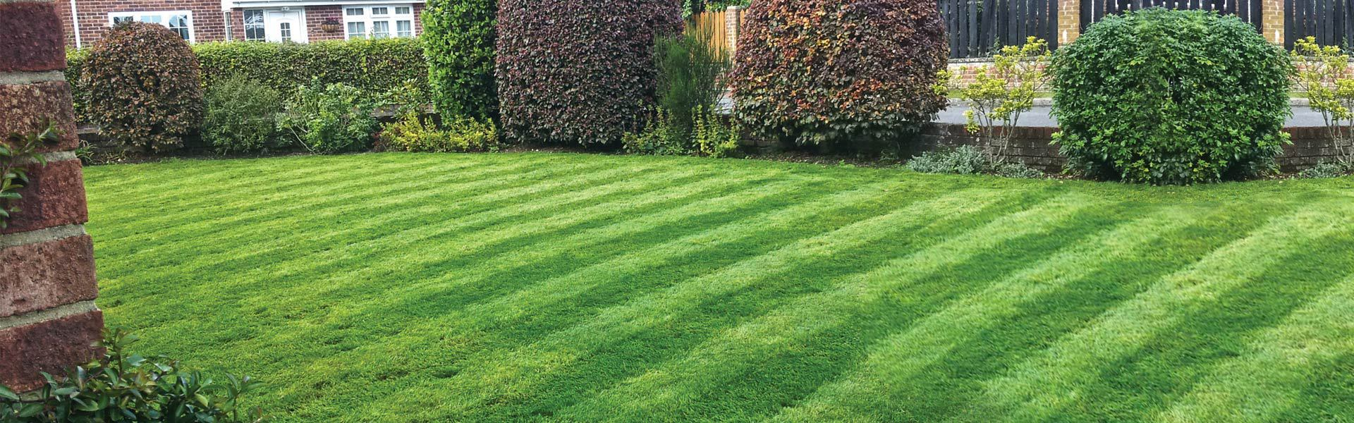 image of a garden lawn cared