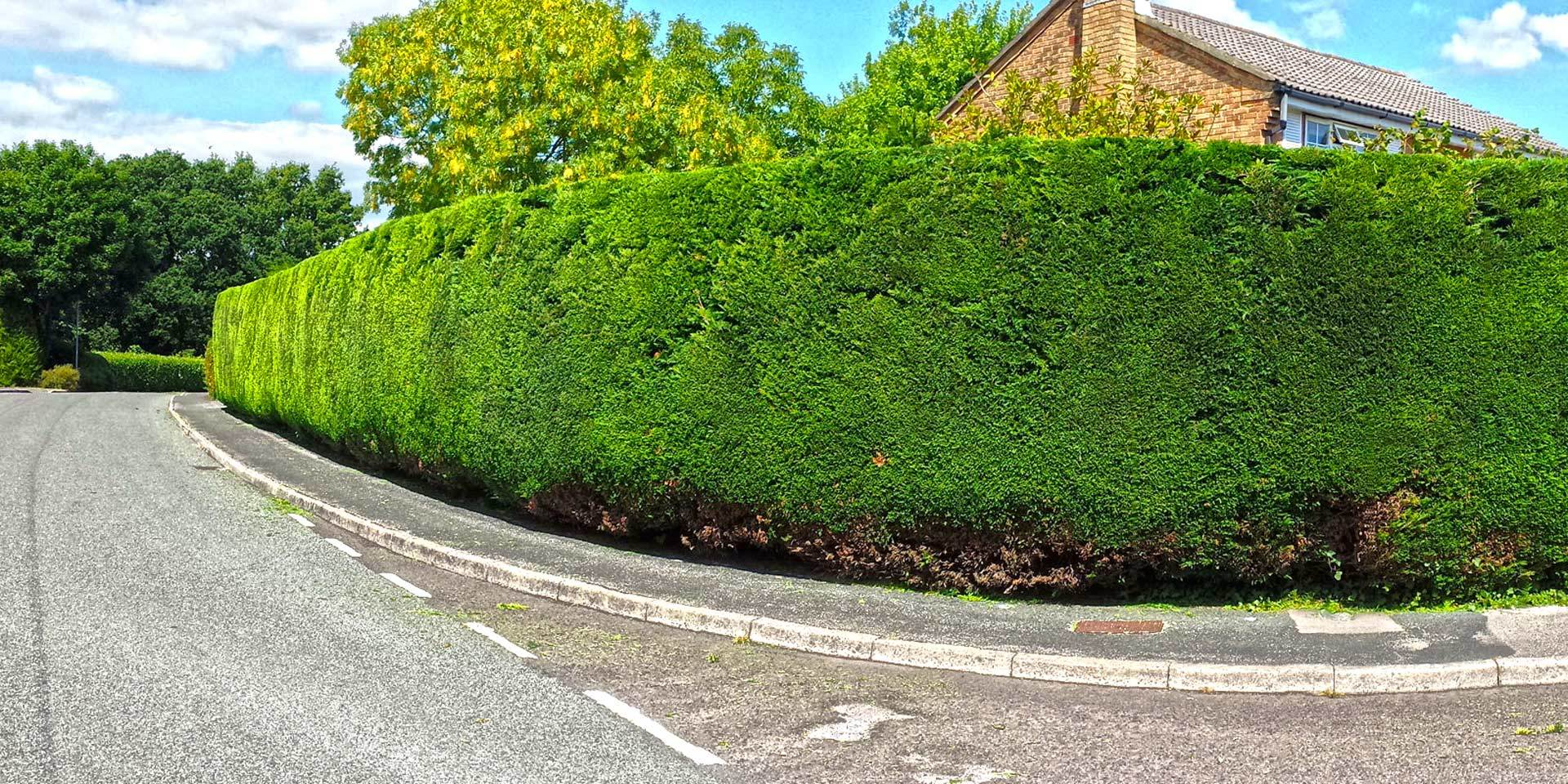 image of hedge maintenance for a domestic customer