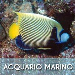 pesci-acquario-marino