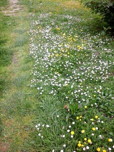 sentiero fiorito