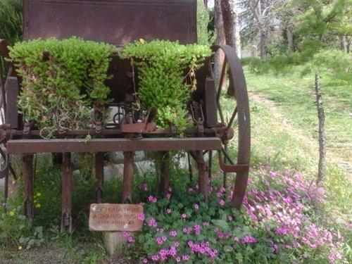 carro antico ornato con fiori e piante
