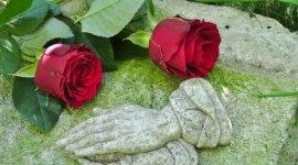 rose, mani