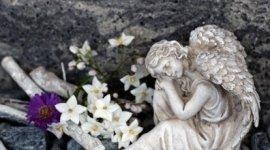 statura, fiori