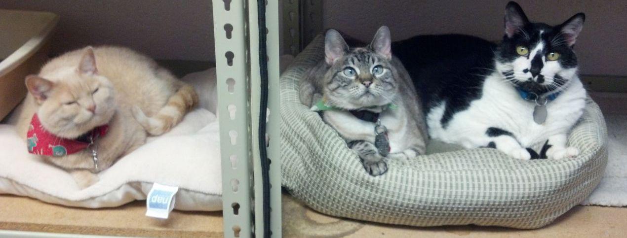 Happy and healthy cats at Lincoln, NE veterinary clinic.
