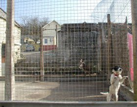 Dog boarding kennels - Mountain Ash, Rhondda Cynon Taff - Fforest Boarding Kennels & Cattery - Kennel