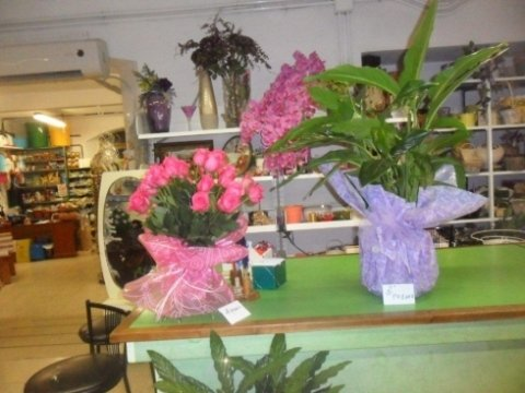 piante ornamentali, idee regalo, mazzi di fiori
