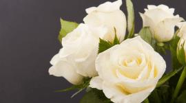 Laura Righi Fiori Rufina, Allestimenti per cerimonie