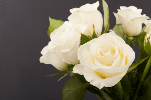 rose bianche, realizzazioni, piante e fiori