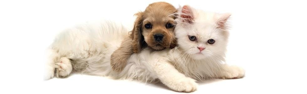 veterinario catania