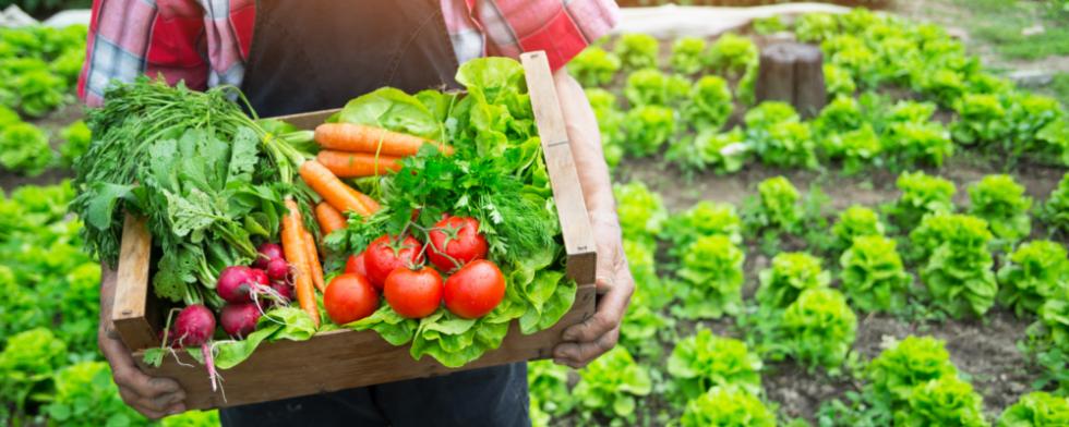 Vendita_piante_verdura