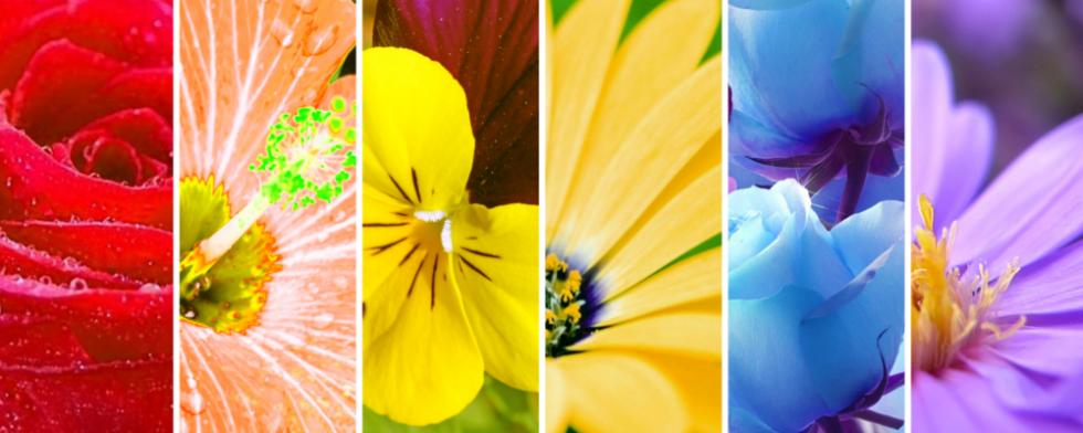 vendita_piante_e_fiori_recisi