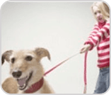 Little girl with dog on lead