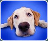 Dog looking sad