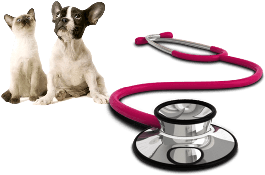 cat and dog with stethoscope
