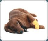 Dog with bandage on paw
