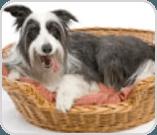 Dog laying in basket