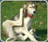 Dog scratching itself