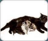 Cat feeding its kittens