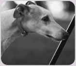 Black and white photo of dog