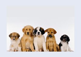 Five cute puppies sat in a row