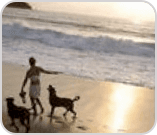 Woman with two dogs on beach